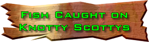 Click to view Fish caught on Knotty Scotty Lures